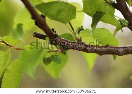 Pruned tree branch with green leaves. Close-up, shallow DOF. - stock photo