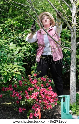 Pruning a sapling - stock photo