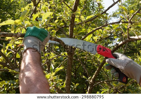 Pruning an apple tree with pruning saws - stock photo