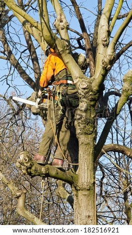 Pruning of a tree, a lumberjack in action - stock photo