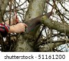 pruning old branches from the nut-tree at the springtime - stock photo