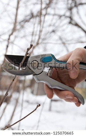 pruning shears and shrubs - stock photo