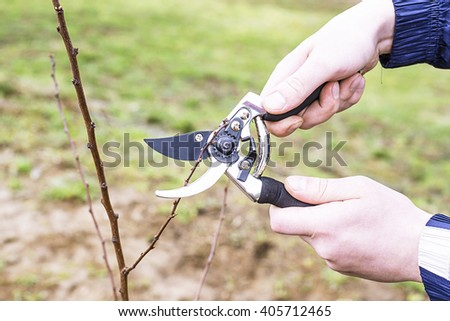 pruning shears trees, garden shears to cut branches, plant trees, gardener cultivates trees in the garden, summer season - stock photo