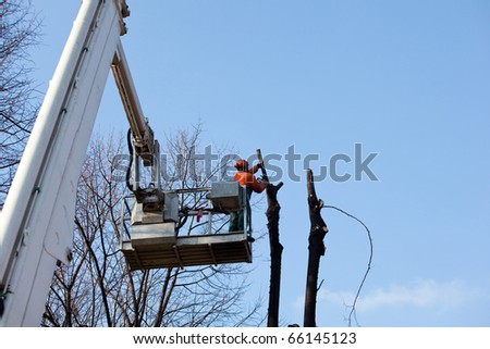 Pruning trees - stock photo
