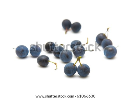 Prunus spinosa (blackthorn; sloe) scattered berries isolated on white background - stock photo