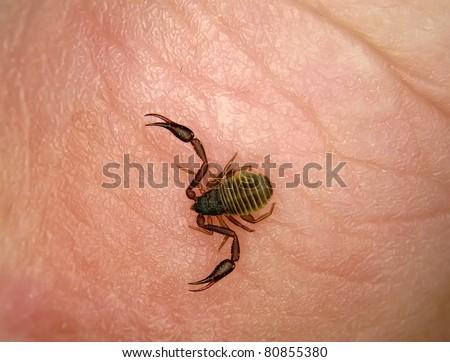 Images of Pseudo Scorpion Bite Humans - #rock-cafe