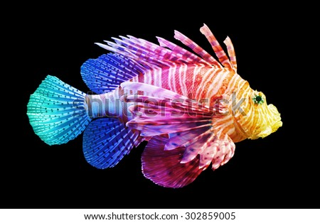 Pterois volitans, Lionfish - Isolated on black - Unique rainbow - stock photo