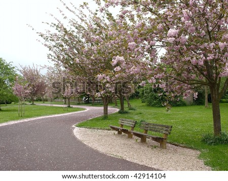 Public Park in Spring with Cherry Blossom on Trees