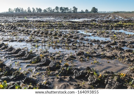 Puddles on the fields after heavy rains. - stock photo