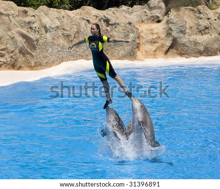 PUERTO DE LA CRUZ, TENERIFE - APRIL 15: Dolphin show in the Loro Parque, which is now Tenerife's second largest attraction with europe's biggest dolphin pool. April 15 2006 Puerto De La Cruz, Tenerife - stock photo