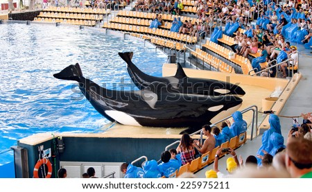 PUERTO DE LA CRUZ, TENERIFE - JULY 12: New Orca Ocean exhibit has helped the Loro Parque become Tenerife's second most popular attraction on July 12, 2014 in Puerto De La Cruz, Tenerife - stock photo