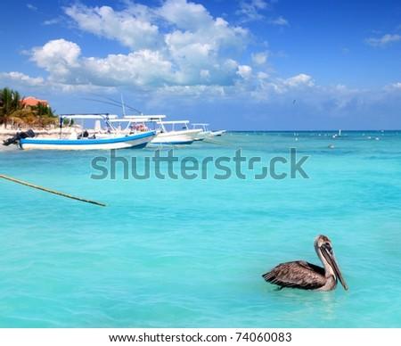 Puerto Morelos beach Mayan riviera Caribbean sea pelican bird - stock photo