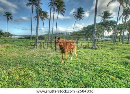 Puerto Plata - Caribbean  - horse - stock photo