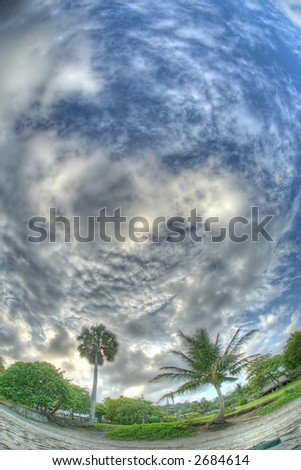 Puerto Plata - Caribbean  - palm - stock photo