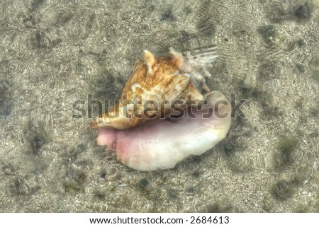 Puerto Plata - Caribbean  - sea shell - stock photo