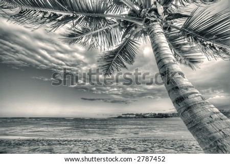 Puerto Plata - Caribbean - sepia  - palm - stock photo