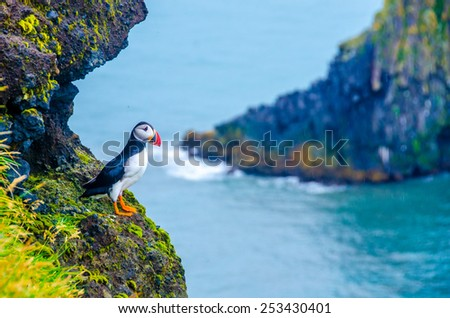 Puffin - Iceland - stock photo