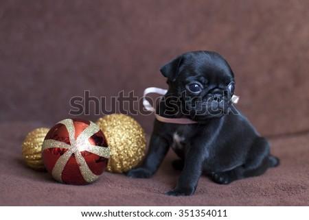 Pug Christmas puppy - stock photo