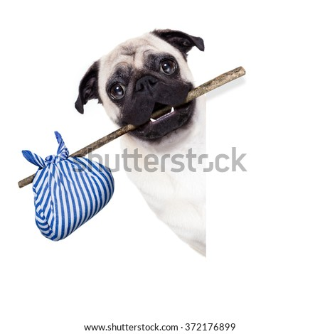 pug dog abandoned left alone   with luggage bag   - stock photo