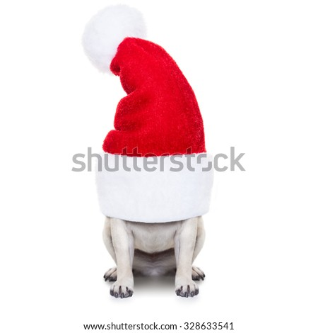 pug dog as santa claus  hiding inside the hat , for christmas holidays, isolated on white background - stock photo