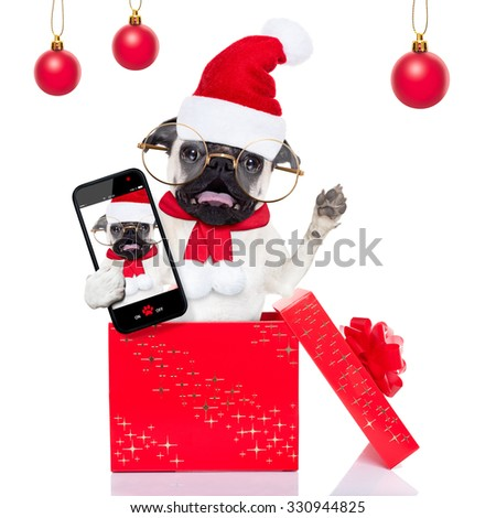 pug dog as santa claus jumping out of a gift   box at christmas holidays, taking a selfie ,isolated on white background  - stock photo