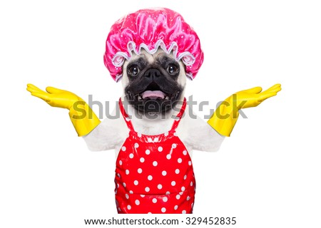 pug dog doing household chores with rubber gloves and shower cap, isolated on white background - stock photo