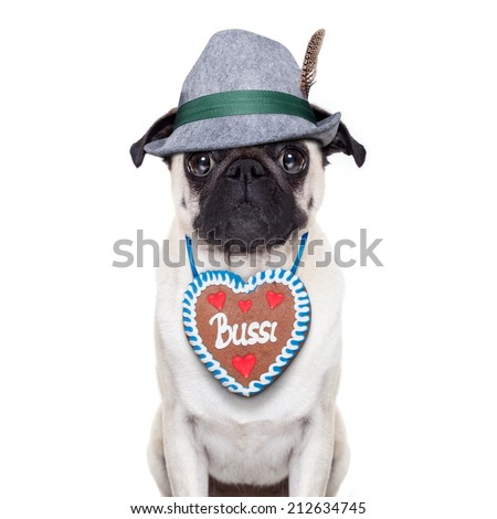 Pug dog dressed up as bavarian with gingerbread as collar