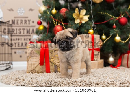 Pug dog near Christmas tree with decorations