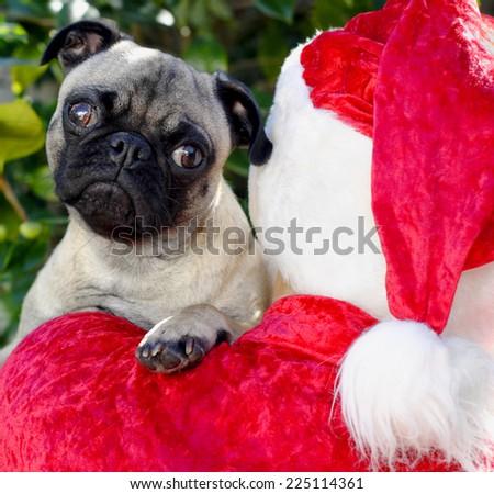 Pug Dog Puppy and Santa, Christmas Pug - stock photo