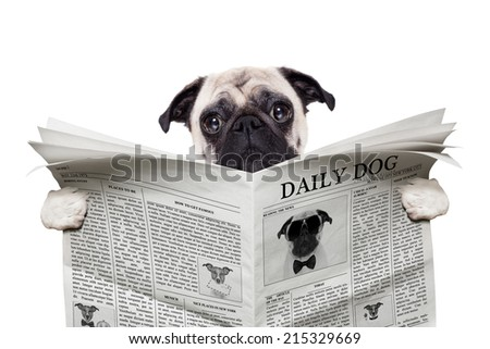 pug dog reading a the news on the  newspaper,  isolated on white background - stock photo