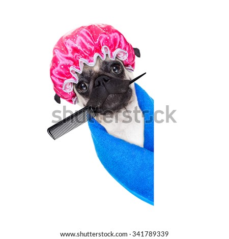 pug dog ready to have a bath or a shower wearing a bathing cap and towel, isolated on white background, behind an empty blank placard or banner - stock photo