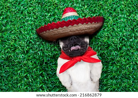 pug dog sleeping siesta on grass in the park and snoring  loud with open mouth - stock photo