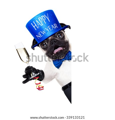 pug dog  toasting for new years eve with champagne glass , behind blank white banner ,  isolated on white background