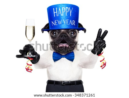 pug dog  toasting for new years eve with champagne glass ,  isolated on white background