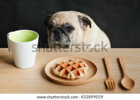 Pug dog waiting to eat Waffle on wooden plate in morning breakfast.