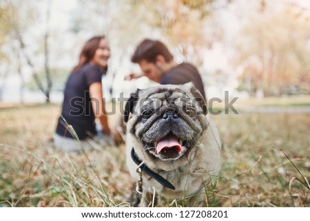 Pug-dog walk in the park and look to camera - stock photo