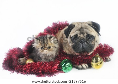 Pug dog with little Persian kitten,surrounded by Christmas ornaments. - stock photo