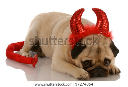 pug dressed up as a devil with guilty expression - stock photo