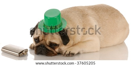 pug dressed up for St. Patricks Day on white background - stock photo
