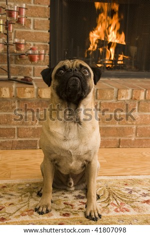Pug in Front of Fireplace - stock photo