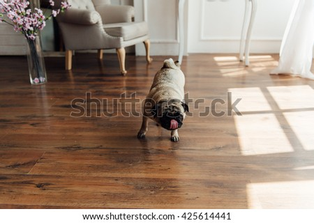 Pug on a wooden floor with an expressive face looking at the camera .
