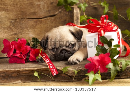 pug puppy and gift  box - stock photo