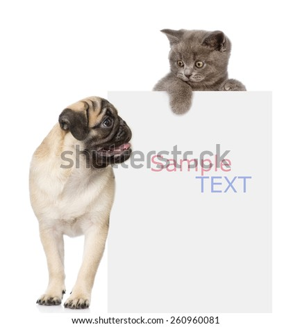 Pug puppy and small kitten above white banner. looking down. isolated on white background - stock photo