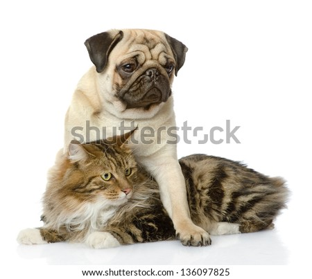 pug puppy hugs a cat. isolated on white background