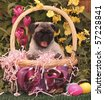 Pug Puppy in an Easter Basket - stock photo