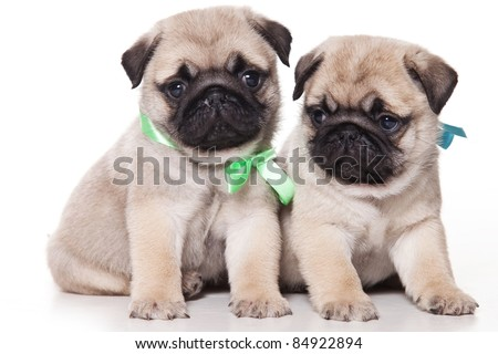 Pug puppy on white background - stock photo
