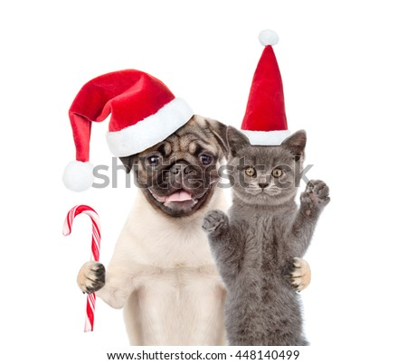 Pug puppy with christmas candy cane embracing scottish cat  in red santa hat. isolated on white background - stock photo