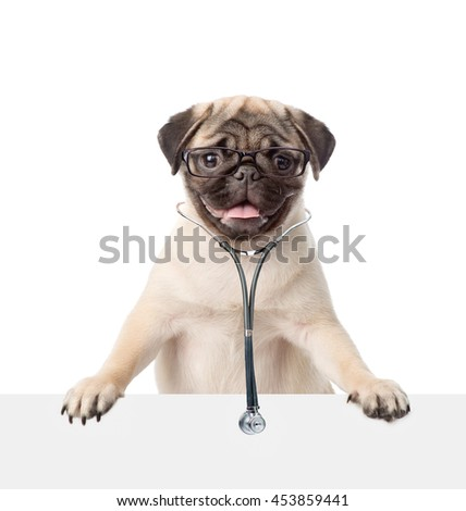 Pug puppy with eyeglasses and with a stethoscope on his neck peeks out from behind a banner. isolated on white background