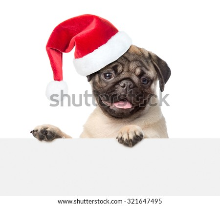 Pug puppy with red christmas hat looking at camera from behind empty board. isolated on white background - stock photo