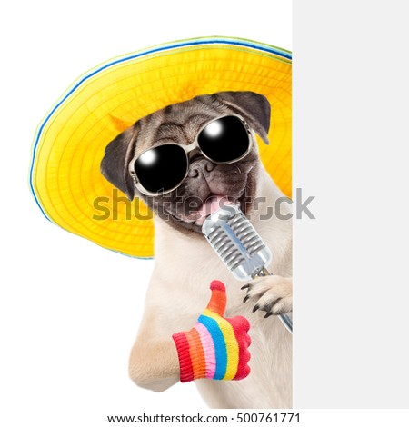 Pug puppy with retro microphone in sunglasses peeking from behind empty board and showing thumbs up. isolated on white background